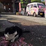 ryohoji_cat